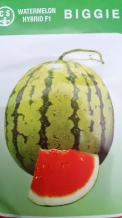 Semangka Biggie, Daging Merah, Chung Shin Seed, buah keras,tahan simpan,tahan pecah, tahan angkut, cepat panen,rasa manis,murah
