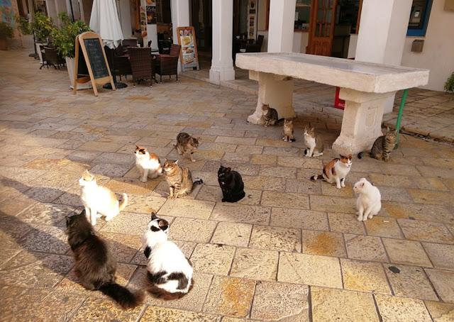Katzen in Gaios auf Paxos, Griechenladn