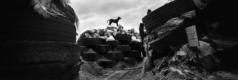 Photographie panoramique d'Édouard Elias montrant un chien sur un tas de pneus pendant la guerre du Donbass.