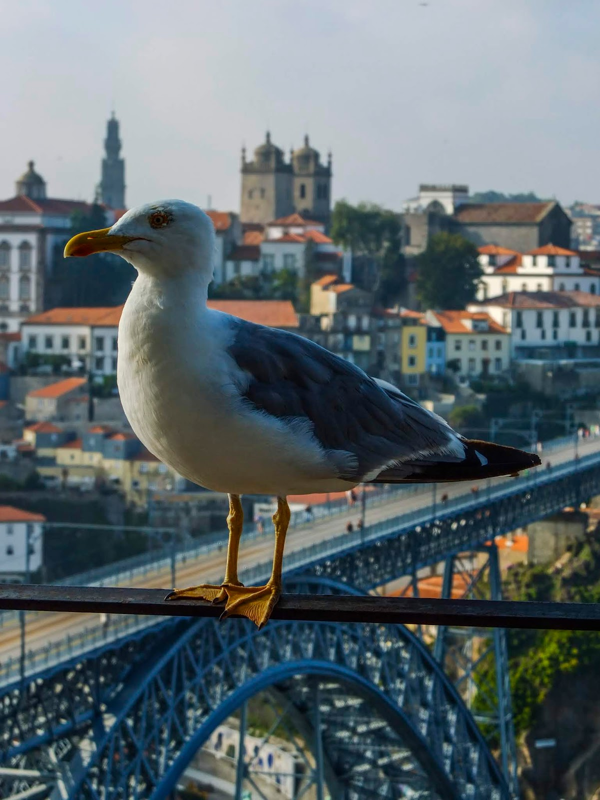 A seagull standing on a rail with a view of the Dom Luis I bridge in Porto, Portugal.