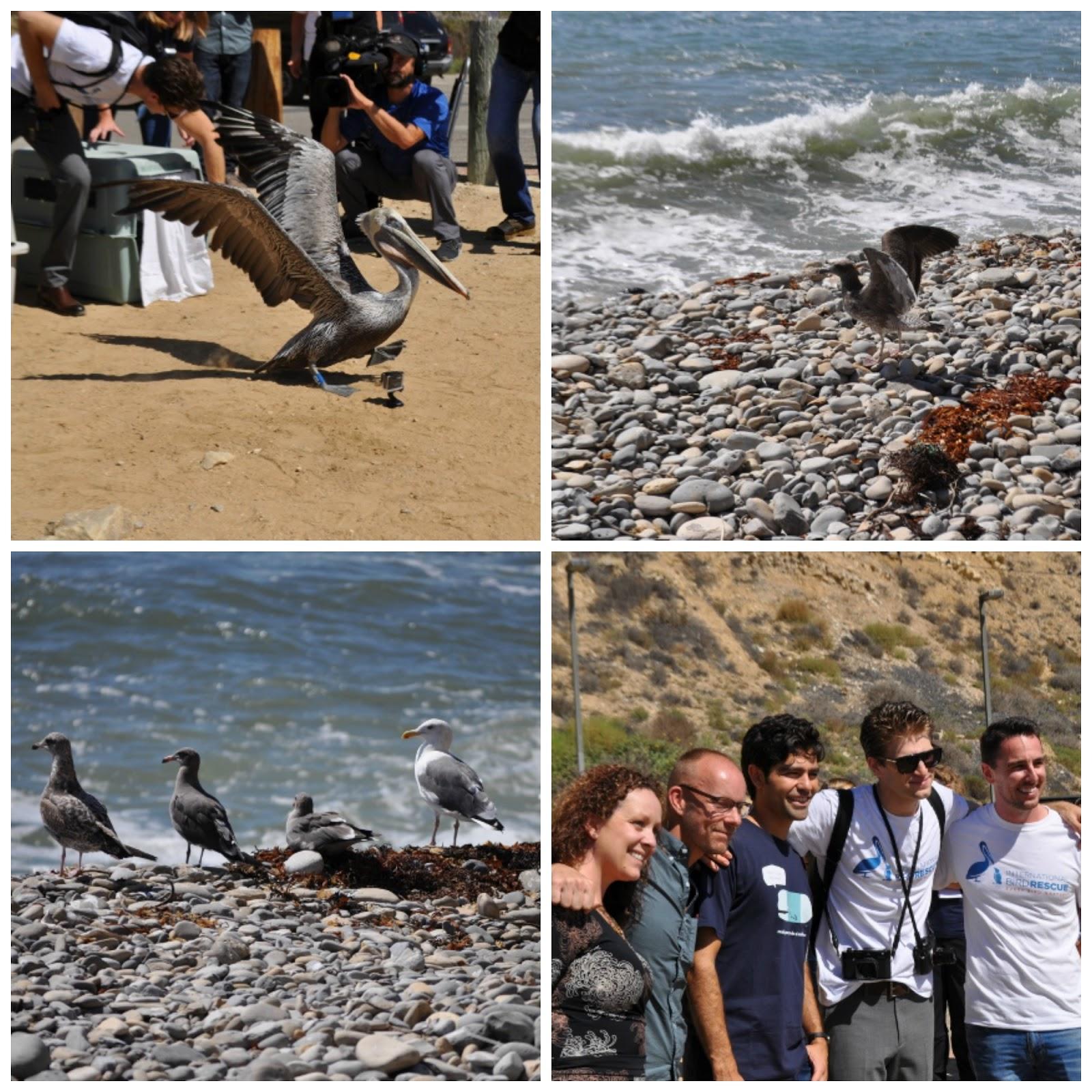 Brown Pelican, Seagulls, Keegan Allen, Adrian Grenier