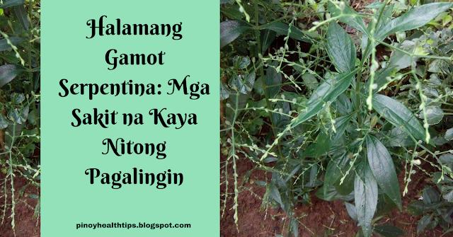 halamang gamot serpentina