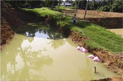 Cara Bina Kolam Ternak Ikan Talapia
