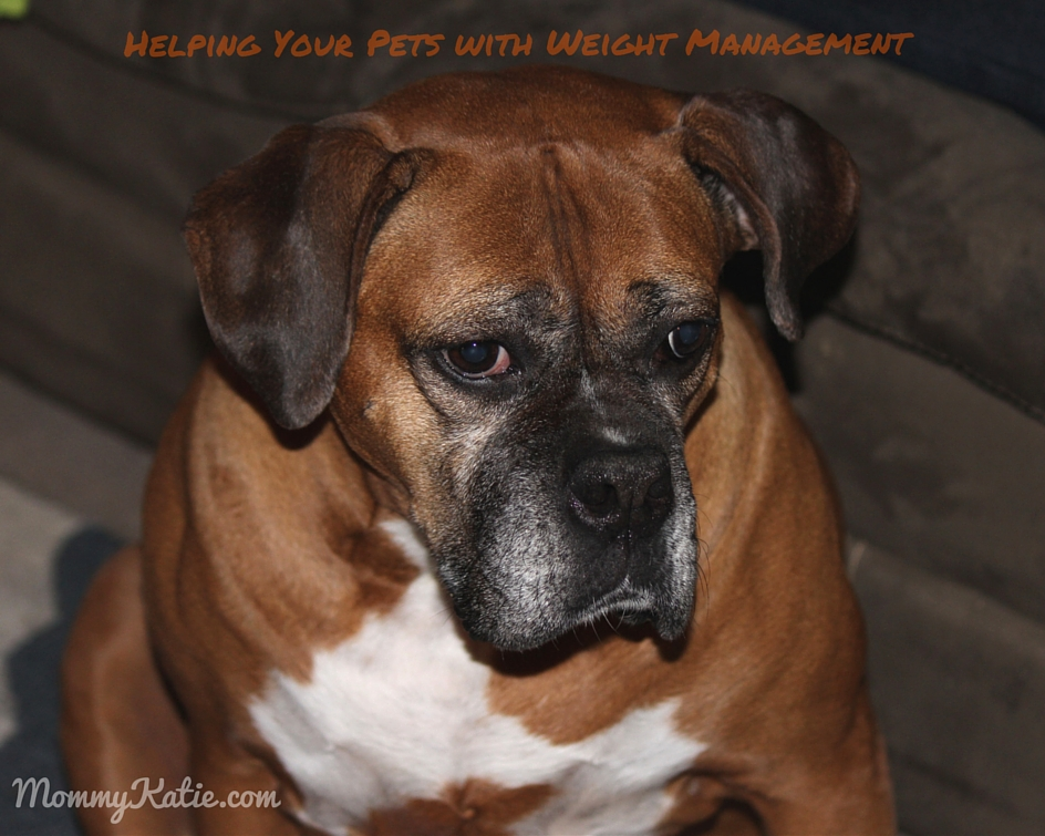 Helping Your Pets with Weight Management with Petcurean
