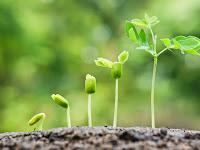 Faktor yang Mempengaruhi Pertumbuhan Tanaman, Apa Saja Itu?
