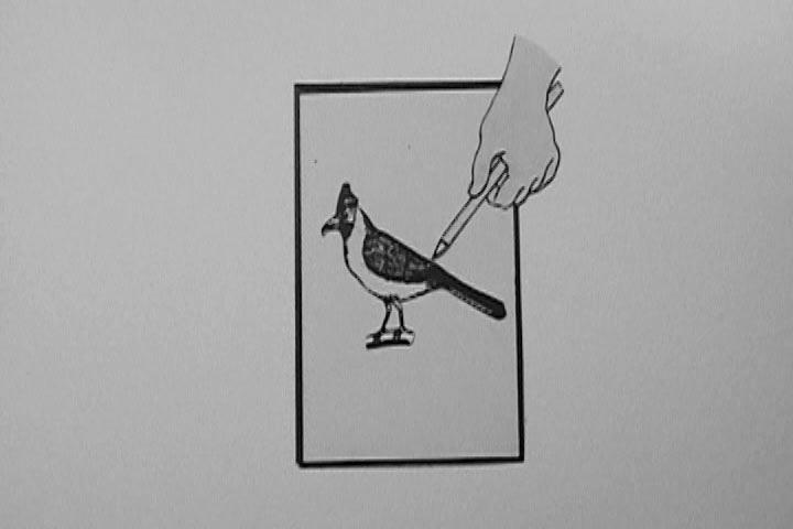 paola vela drawing birds film still