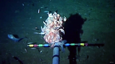 Scientists found anthropogenic mercury in Earth's deep ocean trenches