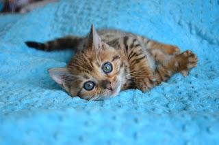 Cuánto tiempo puedes dejar solo a un gatito