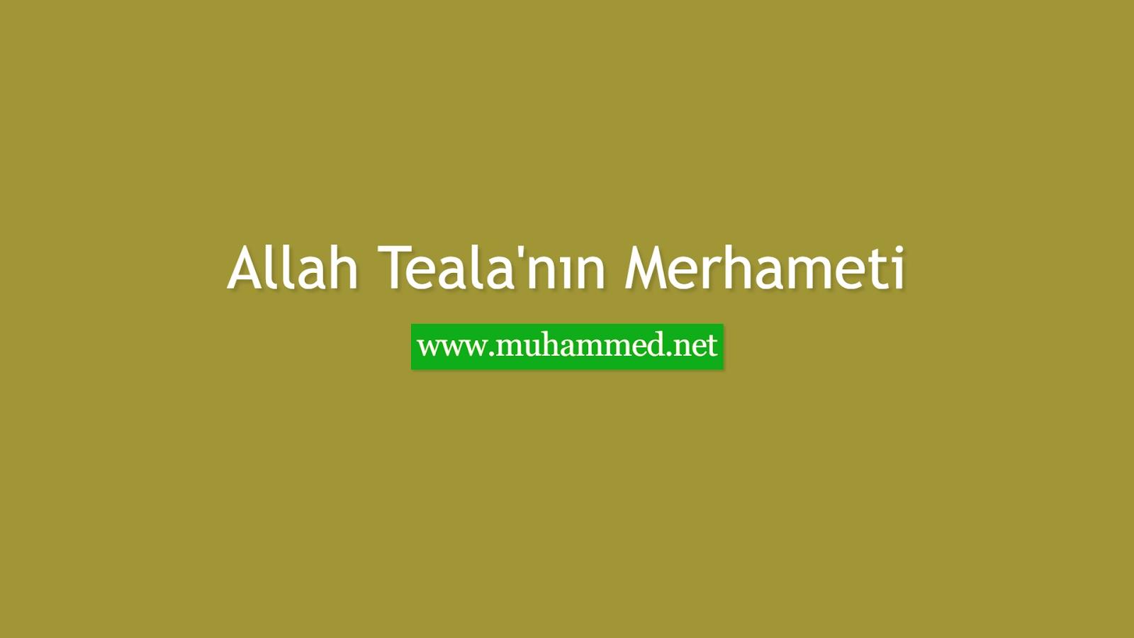 Allah Teala'nın Merhameti