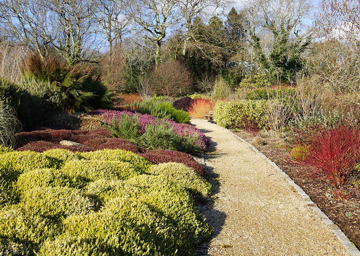 Winter colour at Pinetum Gardens in Cornwall