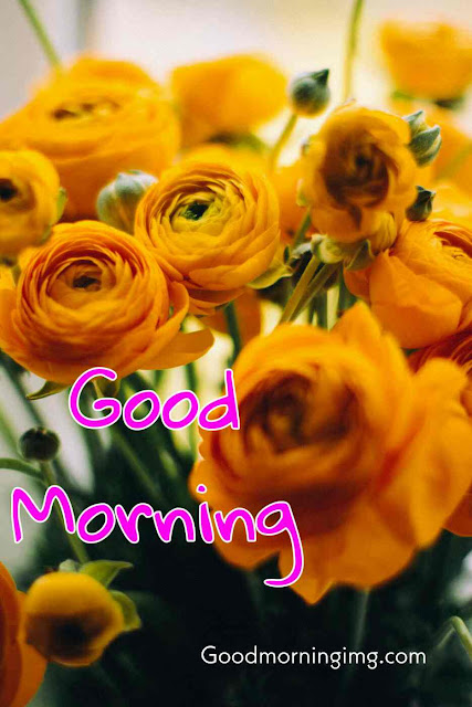 Good Morning Images with Yellow Rose Flower