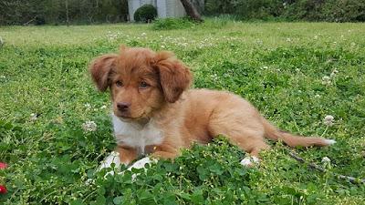Cachorro tumbado en la hierba
