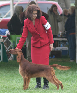 Bling at the Irish Setter National Specialty 2013