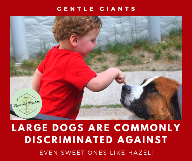 Big dog, bigger discrimination: Large dogs are commonly discriminated against for no good reason