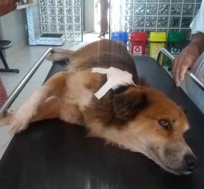 Cachorro é baleado durante assalto a lotérica, em Fortaleza