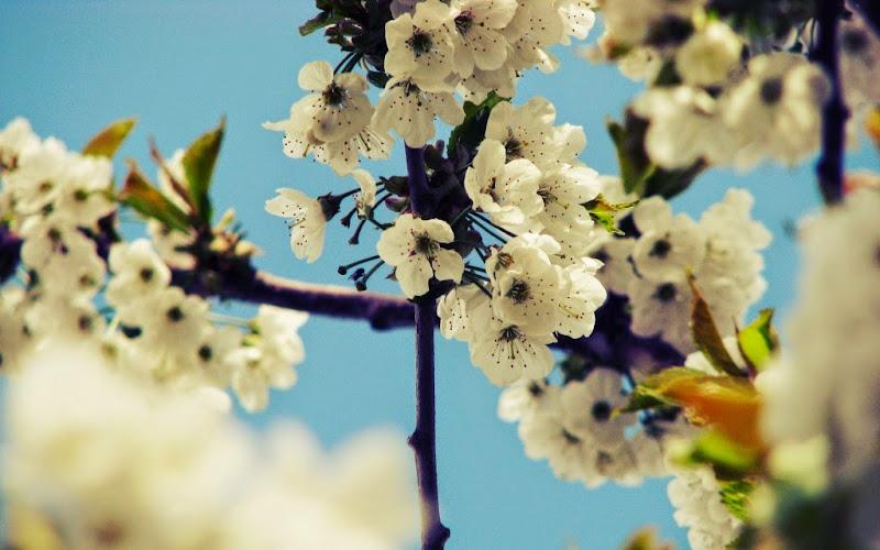 http://www.ayat-kursi.com/2015/04/khotbah-jumat-ayat-kursi.html