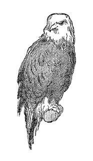 eagle image digital clip art