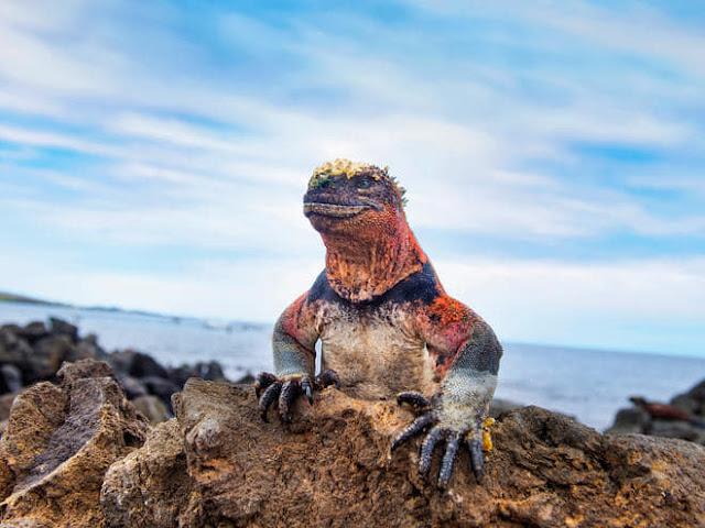 The Marine Iguana [සමුද්ර ඉගුවානා] - Your Choice Way