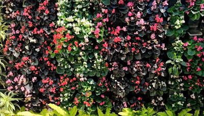 flowering vertical garden