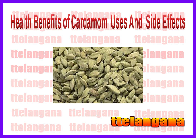 Health Benefits of Cardamom  Uses And  Side Effects
