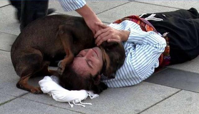 Бродячая собака попыталась «спасти» актера во время представления, и стала известной всему миру