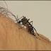 Mais de 500 cidades têm risco de surto de doenças causadas pelo Aedes