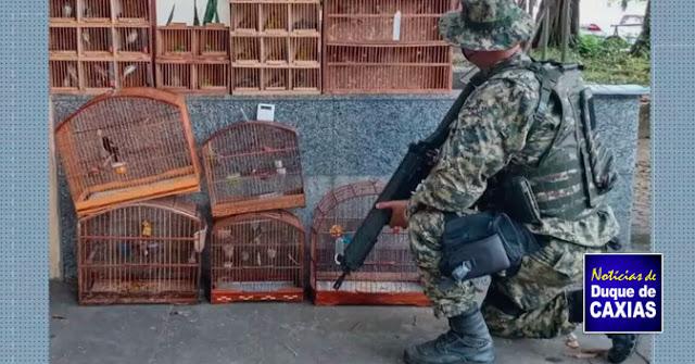 PMs resgatam 158 pássaros que seriam vendidos ilegalmente em Duque de Caxias