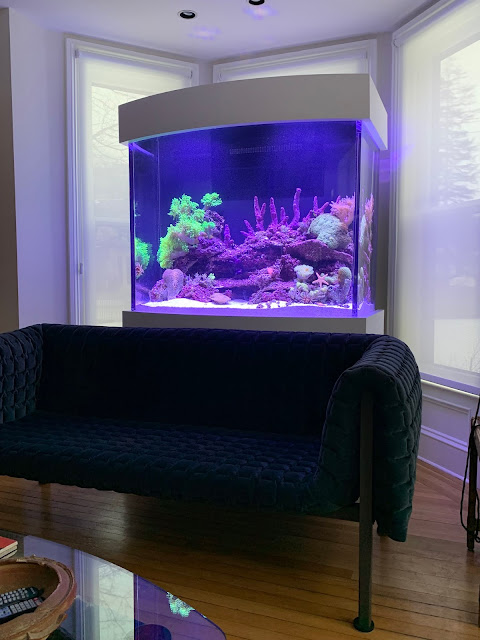 A new 320 gal bow front reef aquarium