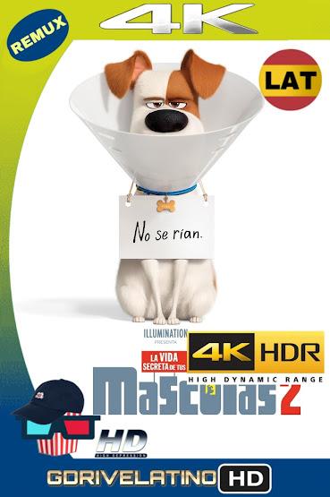 La Vida Secreta de Tus Mascotas 2 (2019) BDRemux 4K HDR Latino-Ingles MKV