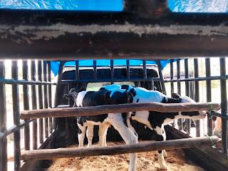 I Cow Farm