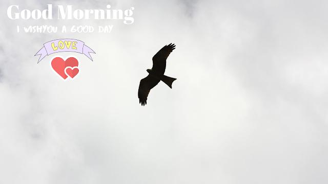 nice bird  good morning images