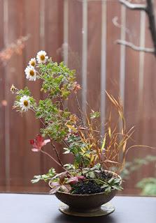 薄緑色の陶盤の上のグレーの鉢の山野草盆栽