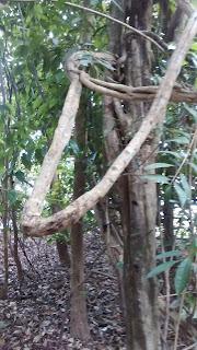 Alta Floresta-mt