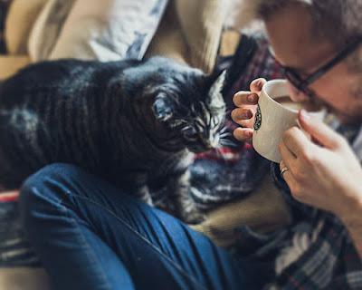 ¿Cuáles son los rasgos de personalidad de una persona felina?