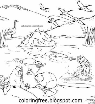 Beautiful dammed river fish and lakes of Canada goose wildlife animals beaver family colouring sheet