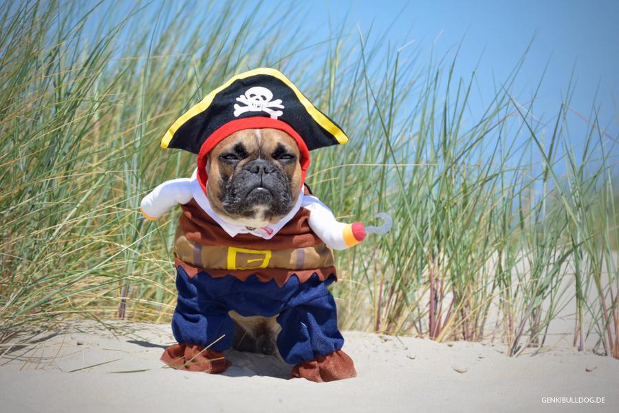 Texel - Hundeblog Französische Bulldogge Hundepirat