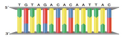 جزيء DNA
