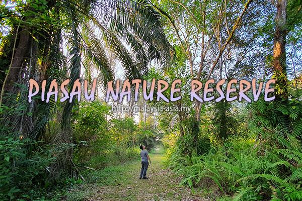 Sarawak Piasau Nature Reserve