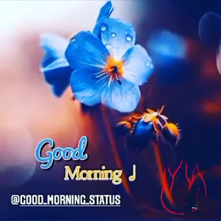 blue flower with good morning text