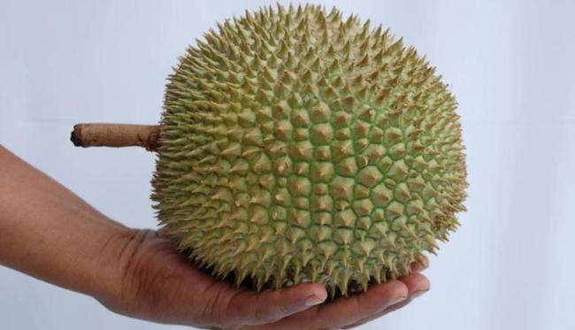 Cara Memilih Durian Berkualitas lewat Kulit Luar