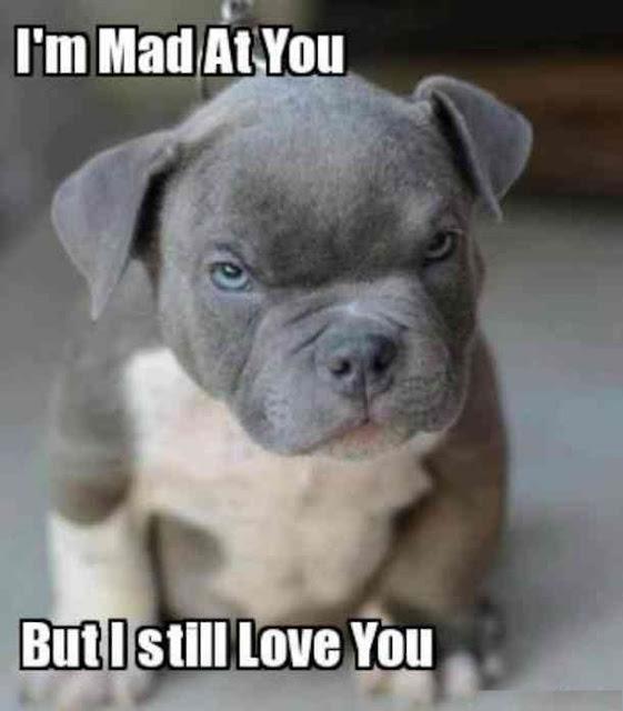 Funny Love Memes 10