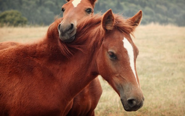 Cute Horses Love Pictures Free Download HD