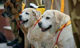An Army Major And His Dog Died In A Fire Incident At Gulmarg In North Kashmir's Baramulla District