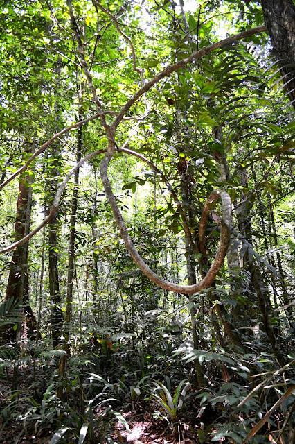 Guyane, Kourou, la montagne des singes, randonnée, jungle