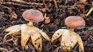fungi, komponen biotik