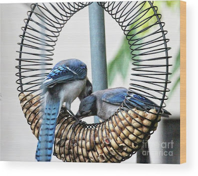 This is a screen shot of one of my images of Blue Jays which has been rendered on to wood and is available in different sizes via Fine Art America. https://fineartamerica.com/featured/blue-jays-wooing-1-patricia-youngquist.html?product=wood-print