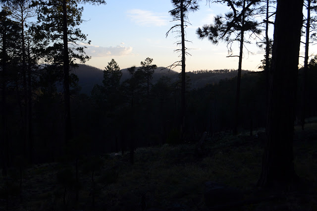 dark trees against the light sky