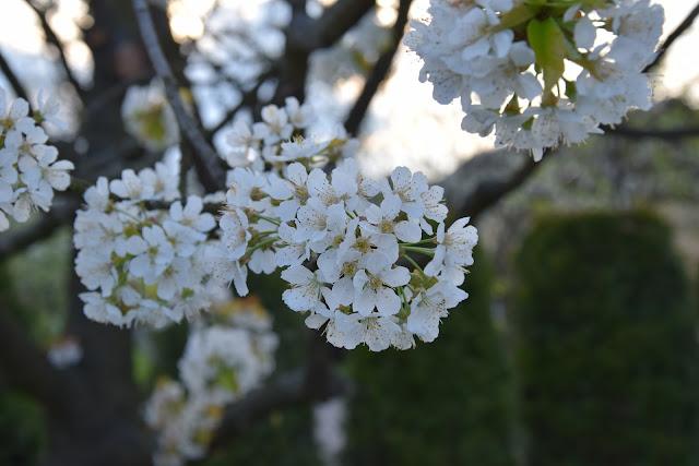 Wiosenne zdjęcia pełne pozytywnej energii!