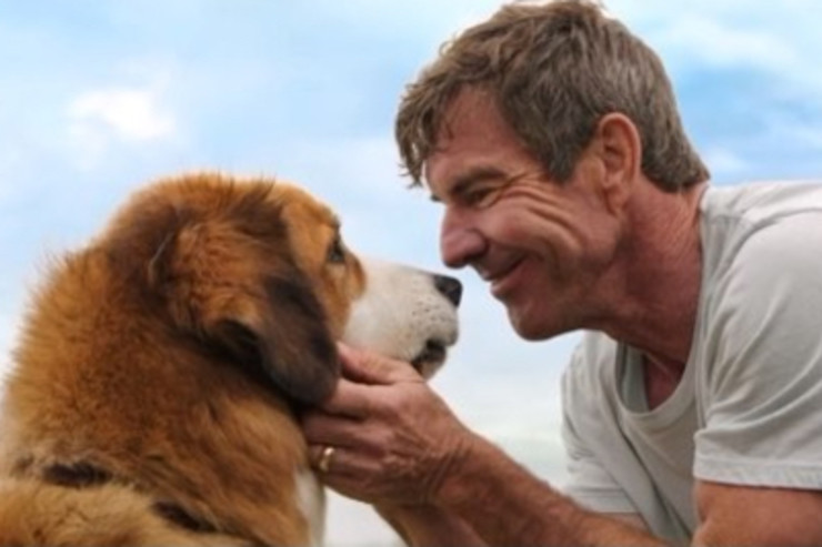 Ethan And Bailey A Dog S Purpose