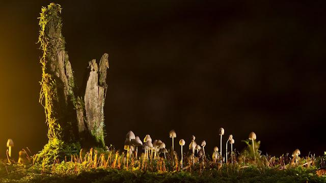 خلفيات مناظر طبيعية وأضواء مميزة